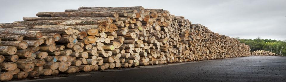 Billot De Bois De Chauffage : Billots Noyer Noir Vente de billots de bois franc – Noyer Noir